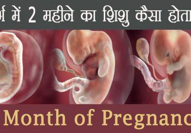 गर्भावस्था का दूसरा महीना